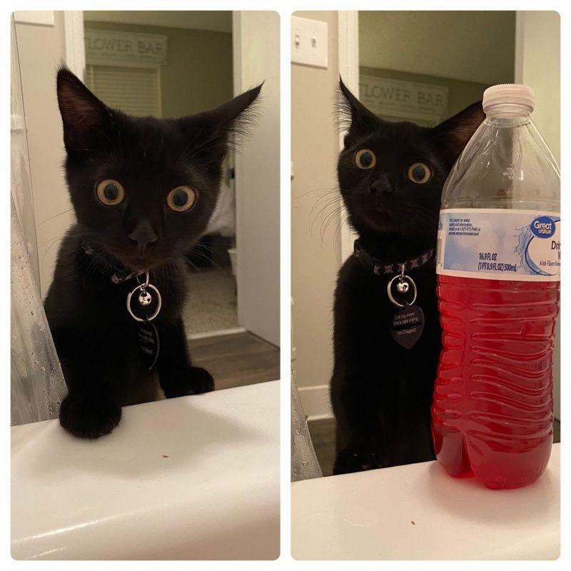 ▲黑貓鮪魚(Tuna