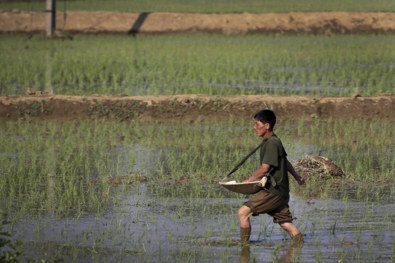 ▲北韓長期面對糧食危機,不只曾向南韓借錢買糧,還有建設的工業借款等等。資料照。(圖/美聯社/達志影像)