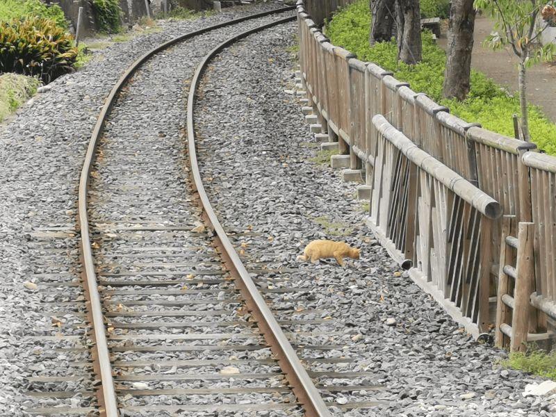 日本鐵道公園的鐵軌出現一隻浪貓,駕駛員停車小聲鳴笛:「拜託讓我過!」(圖/Twitter@DL17S1969)