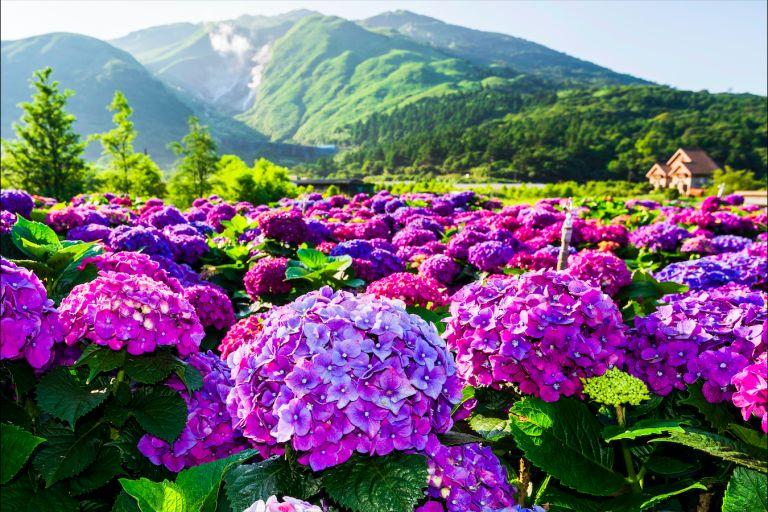 ▲陽明山。(圖/取自Shutterstock)