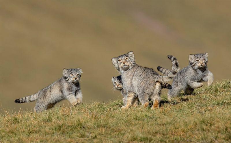 ▲2020野生動物攝影獎的其他入圍佳作。(圖/翻攝自Wildlife