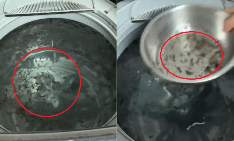 ▲有網友家的洗衣機不斷飄出黑色汙垢。(圖/翻攝爆系知識家)
