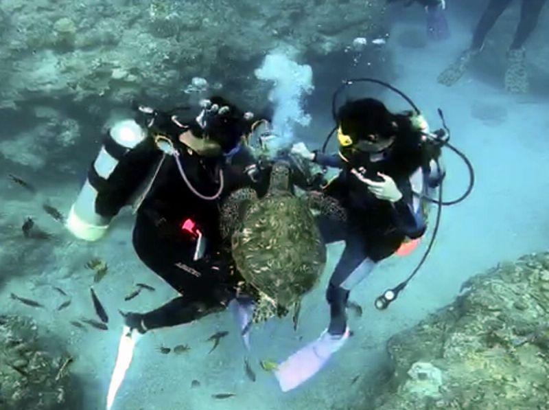 ▲小琉球龍蝦洞海域潛水民眾發現海龜並利用食物吸引,進而餵食海龜情形。