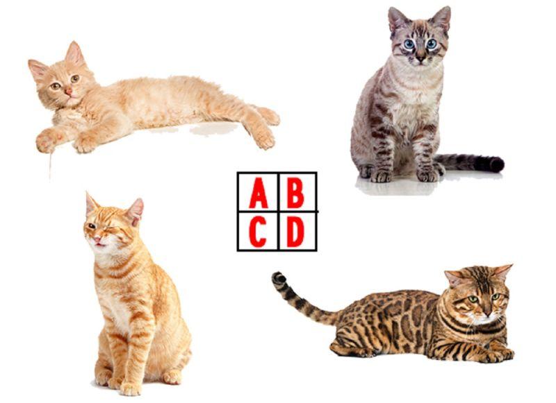 無敵準!<b>直覺</b>選哪隻貓咪會說人話?測「別人眼中的你」