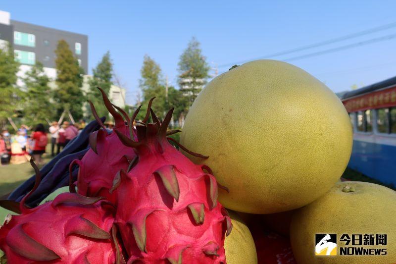 ▲大白柚、紅龍果為二水鄉特有的農特產。(圖/記者陳雅芳攝,2020.10.20)