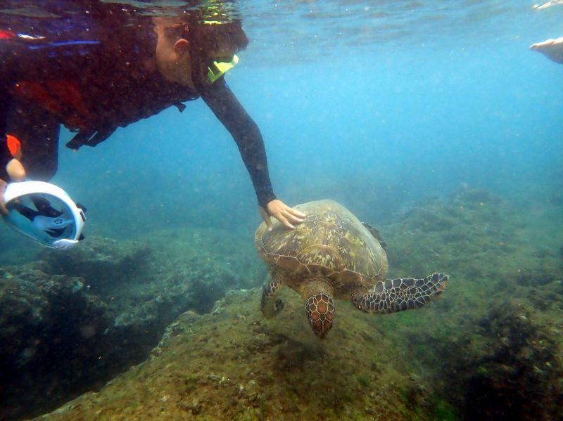 宣導無效浮潛遊客照摸海龜 仍無法可重罰