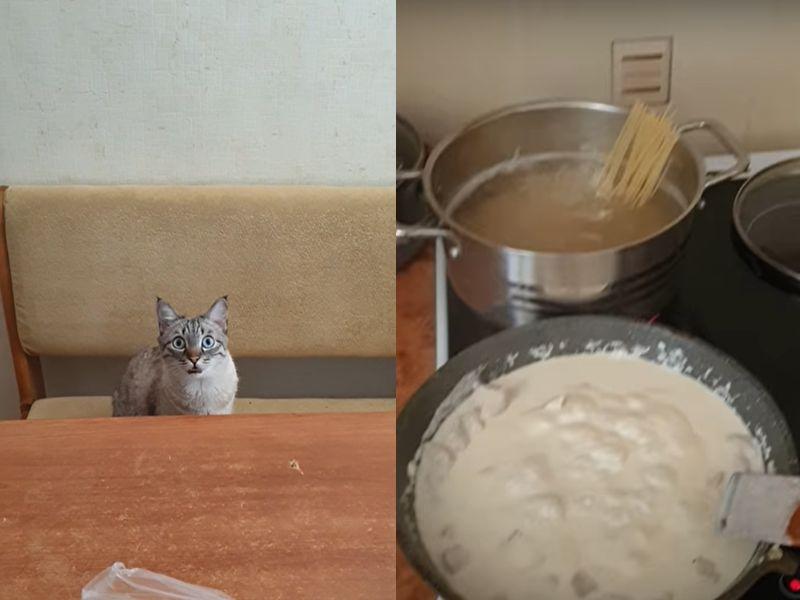 主人煮<b>義大利麵</b> 喵皇坐在餐桌前狂吞口水:「偶的呢?」