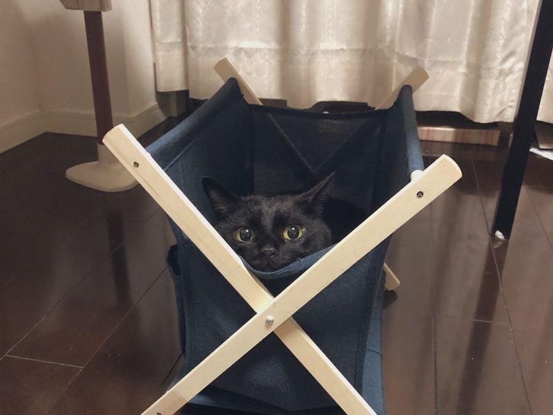 收納籃「長出黑貓」饋臉<b>賣萌</b> 喵讚賞:「躺起來每賣!」
