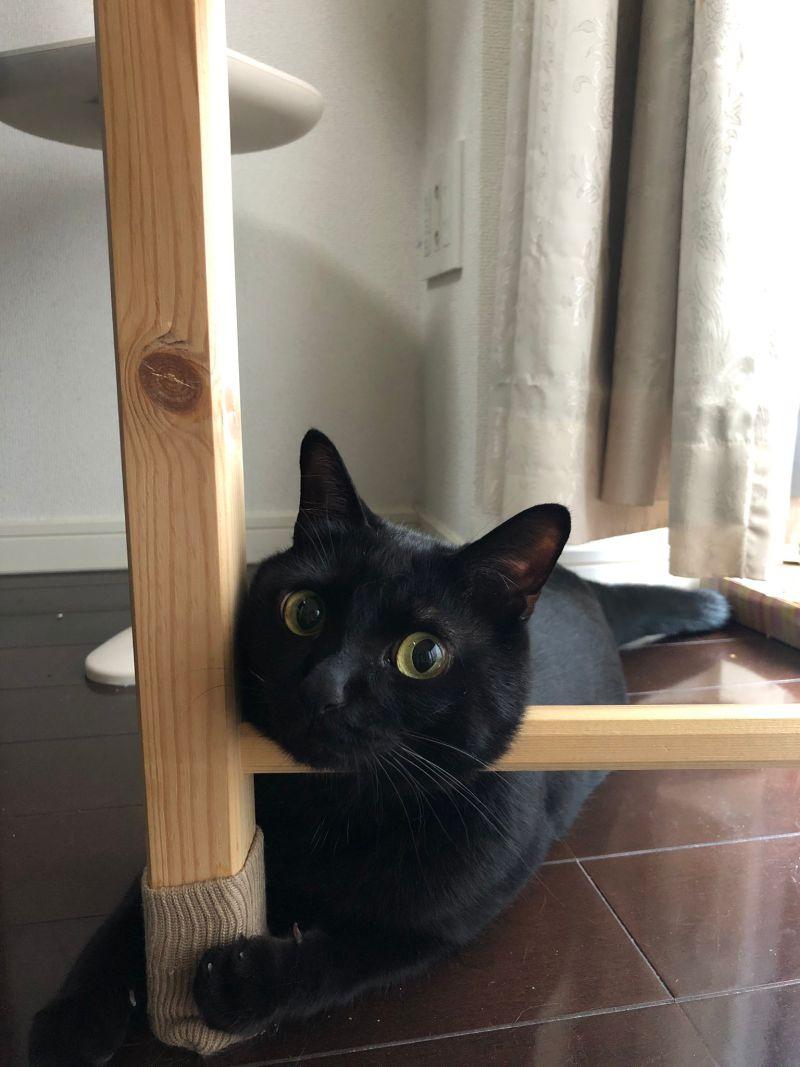 ▲這隻黑貓三歲叫「Koneroku」(圖/Twitter@nkknrk)