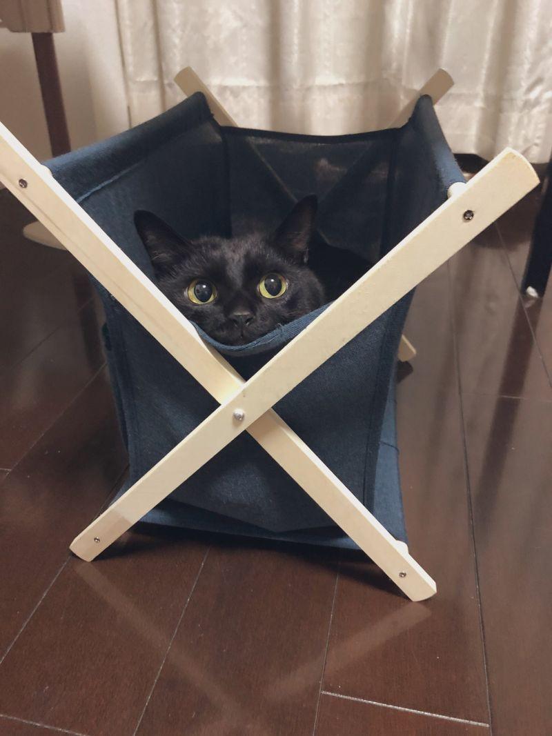 ▲咦?這是新的貓窩?(圖/Twitter@nkknrk)