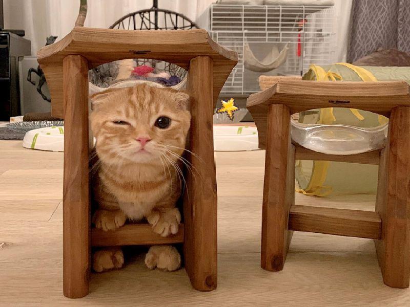 直擊「臘腸貓貓」崩壞睡顏 網笑:還是一樣可愛啦~