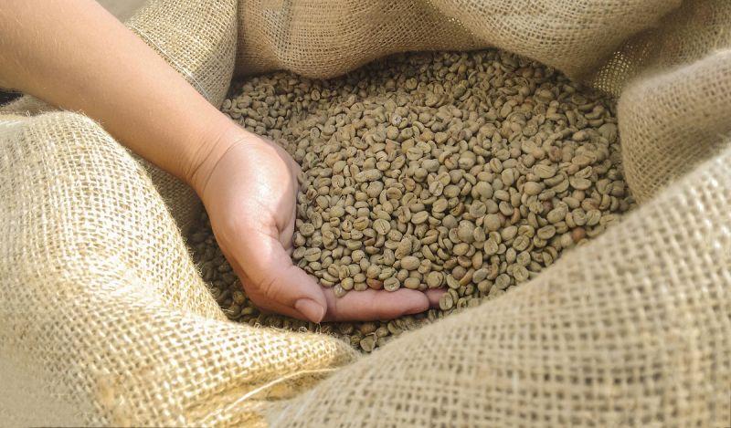 咖啡殼也能成黃金?綠色美妝用它享譽國際