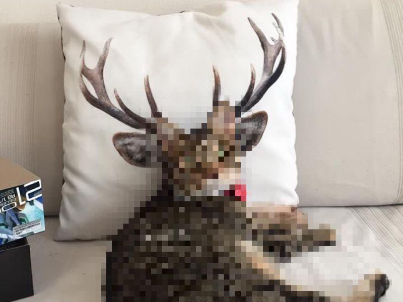 「牠」饋沙發<b>抱枕</b>意外產生新品種生物 網笑:完全無違和