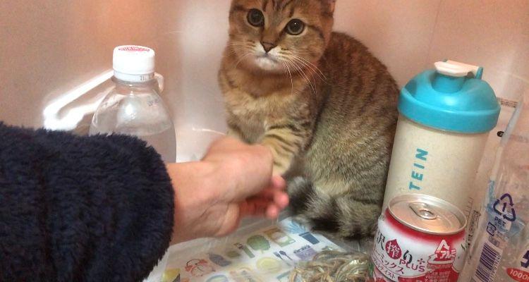 ▲這隻堅持不從冰箱出來的貓叫「米尼拉」(圖/Twitter@minira_diary)