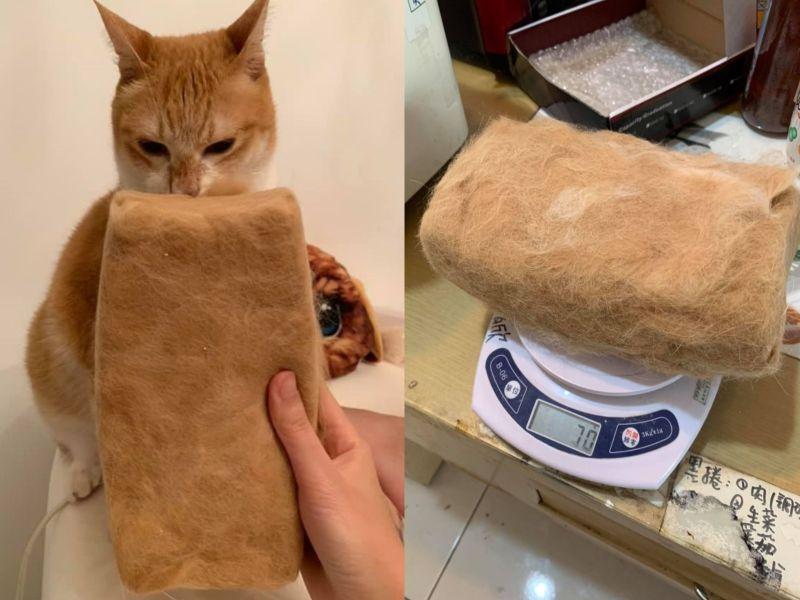 貓奴收藏主子毛多年 「集毛成磚」網驚:可以當枕頭了!