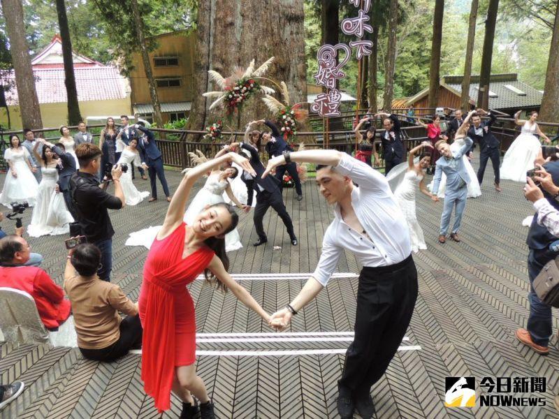 ▲阿里山國家風景區管理處舉辦神木下婚禮邁入十四年,每年均有巧思浪漫為新人證婚。(圖/記者任禮清攝,2020.10.25)
