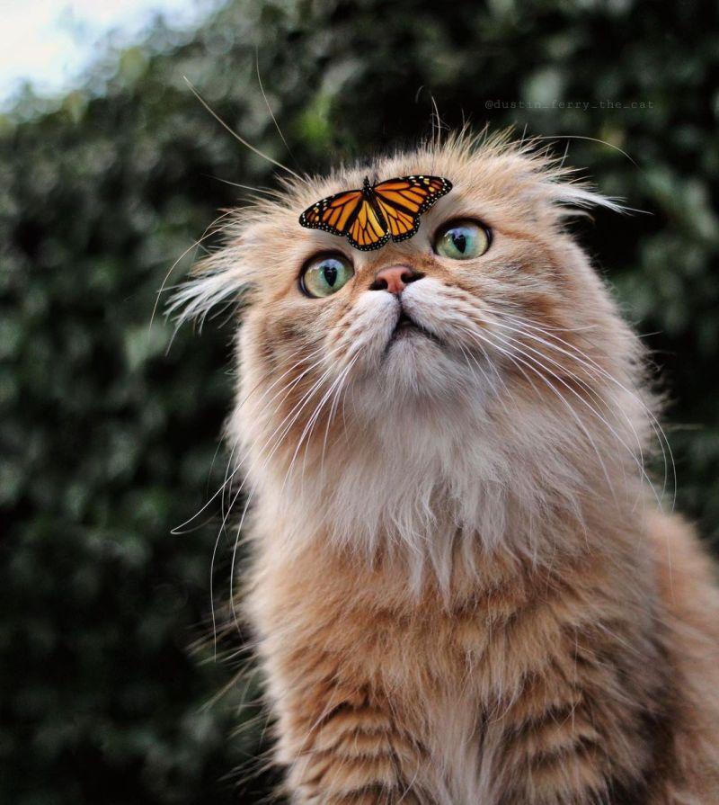 ▲額……是不是有什麼在偶的臉上?(圖/Instagram@dustin_ferry_the_cat)