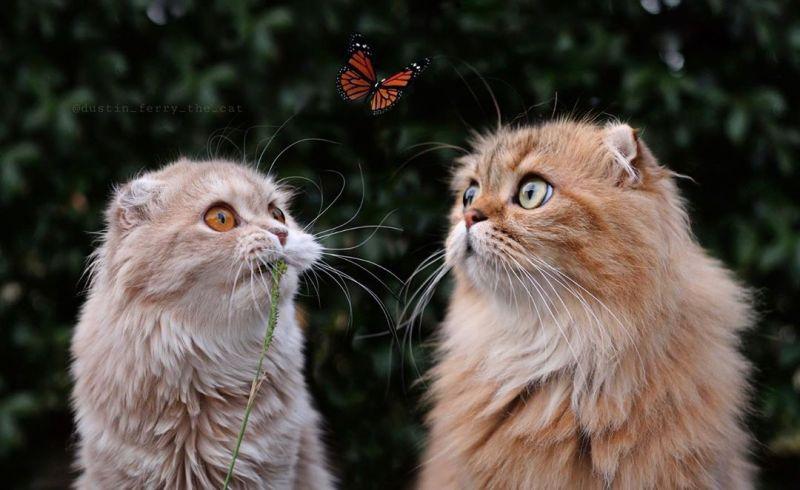▲主人:這個叫做蝴蝶! 喵喵們:ㄏㄨˊㄉ一ㄝˊ?(圖/Instagram@dustin_ferry_the_cat)