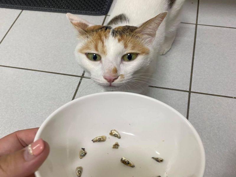 三花貓吃小魚乾留「整碗魚頭」 網笑:給奴才煮湯?
