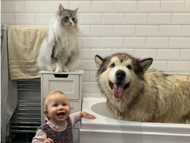 全家輪番哄洗澡 狗狗剛進浴缸秒逃亡:拜託放過偶吧~