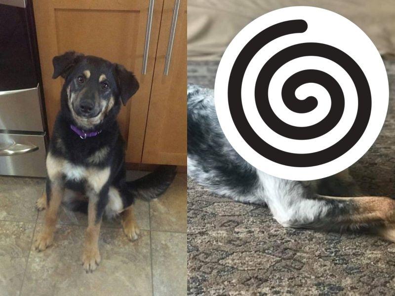 媽秀牧羊犬養3年「從黑變白」 網:養到驚喜包!