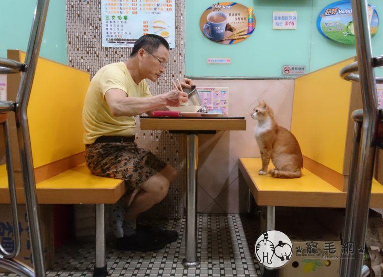▲小斑喜歡陪爸爸吃飯,看別人吃比較香~(圖/大斑小斑授權提供)