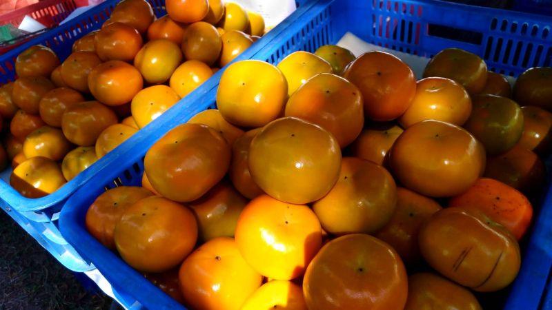 ▲五峰鄉公所今日舉辦五峰鄉甜柿節開幕活動,本周起連兩週竹北與台北促銷