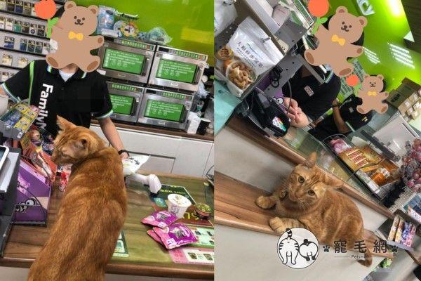 ▲嘎妹常常陪馬麻去超商,大部分店員都認識牠。某次剛好遇到客人買貓餐包,嘎妹好奇爬上去聞,被客人稱讚後就一副得意洋洋的樣子(圖/網友陳欣伶授權提供)