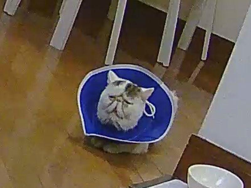 從監視器撞見愛貓有趣表情 網笑歪:「臉怎摸囧成醬?」