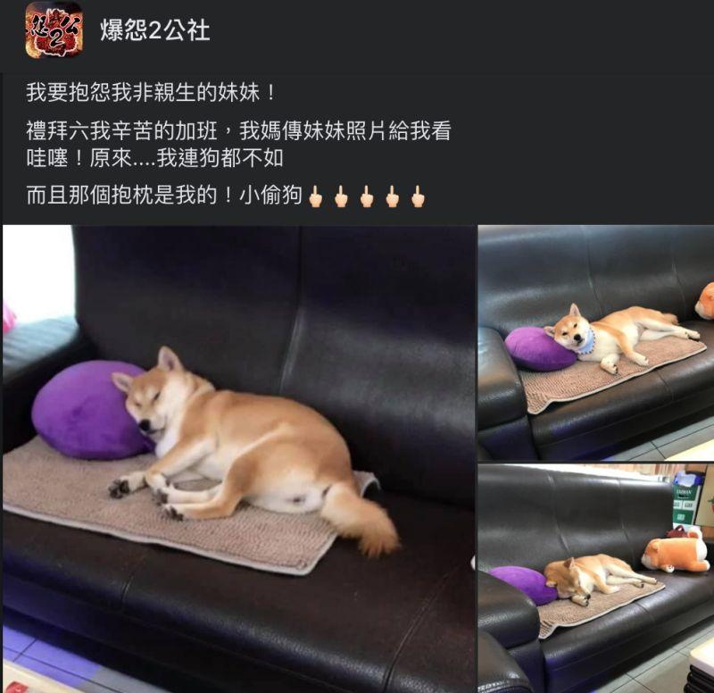 ▲網友抱怨,自己正在辛苦加班的時候,媽媽卻傳來家中狗妹妹慵懶的照片,讓大家笑翻。(圖/翻攝自《爆怨2公社》臉書社團)