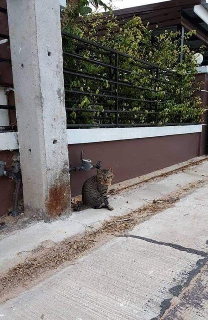 ▲離家晃悠的貓貓終於回來了!(圖/Facebook@ช้างเผือก)