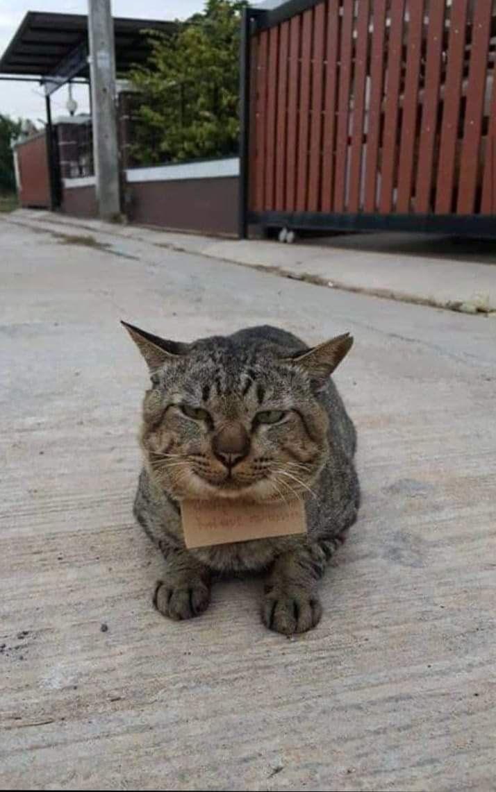 ▲哎呀!是隻貪吃的貓貓呢(圖/Facebook@ช้างเผือก)