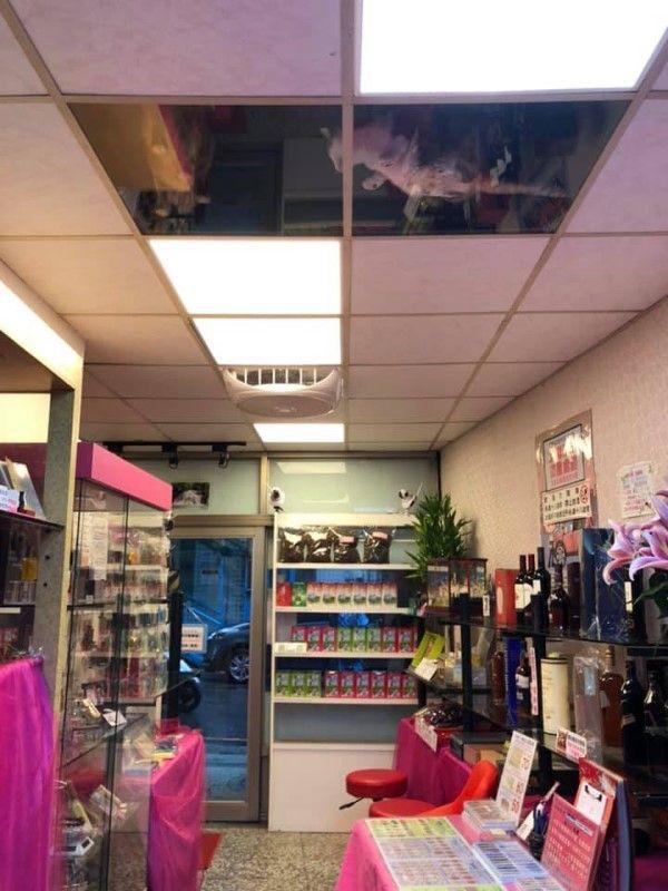 ▲葉小姐在三芝開的刻印店,天花板改用壓克力做成貓咪的「天空步道」(圖/網友葉小婷授權提供)