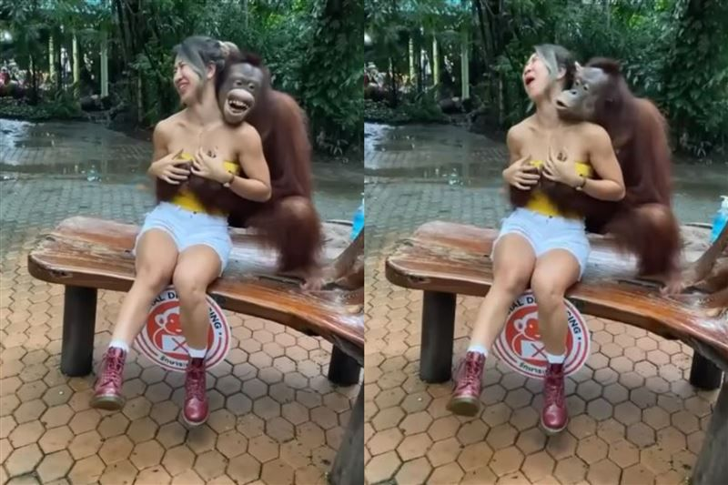 ▲一名身材姣好的正妹,被紅毛猩猩給吃豆腐,除了親吻外,還遭到襲胸。(圖/翻攝自IG