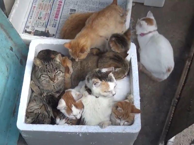 影/天冷浪貓全擠在保麗龍箱「饋修」 網:我想整箱帶走