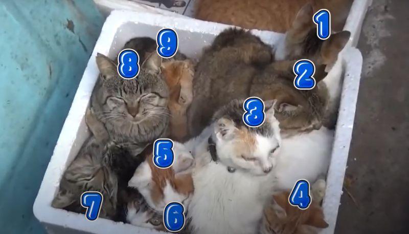 ▲保麗龍箱擠了9隻浪貓(圖/猫の島青島授權)