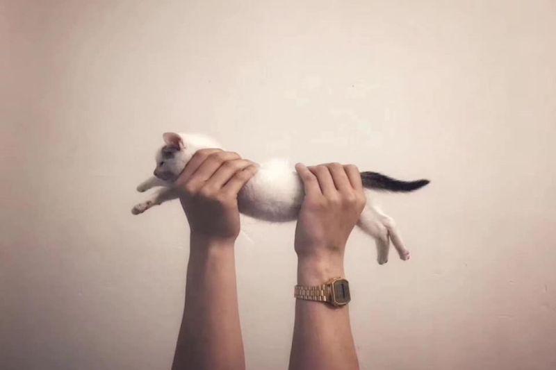 奴才花199天記錄貓咪的「拉長照」 網讚:超棒的演變史!