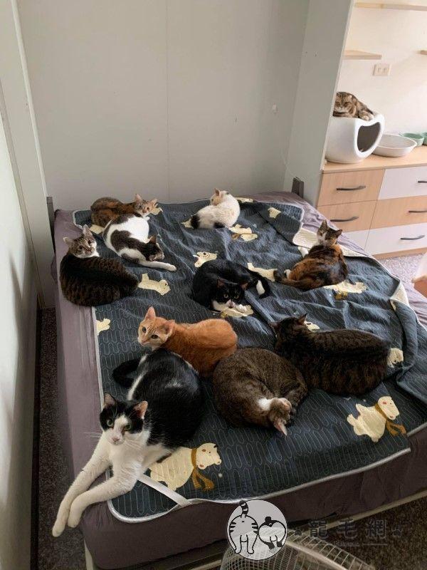 ▲劉炘老師家中養了15隻貓咪,平時都會佔據他的床(圖/網友劉炘授權提供)
