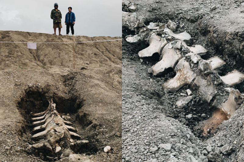 考古學在泰國獲重大突破!內陸地下6米驚現鯨魚骨骸