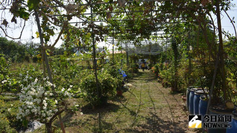▲嘉義市啓智協會租用農地,用以建置愛心農園。(圖/記者郭政隆攝影2020.11.17)