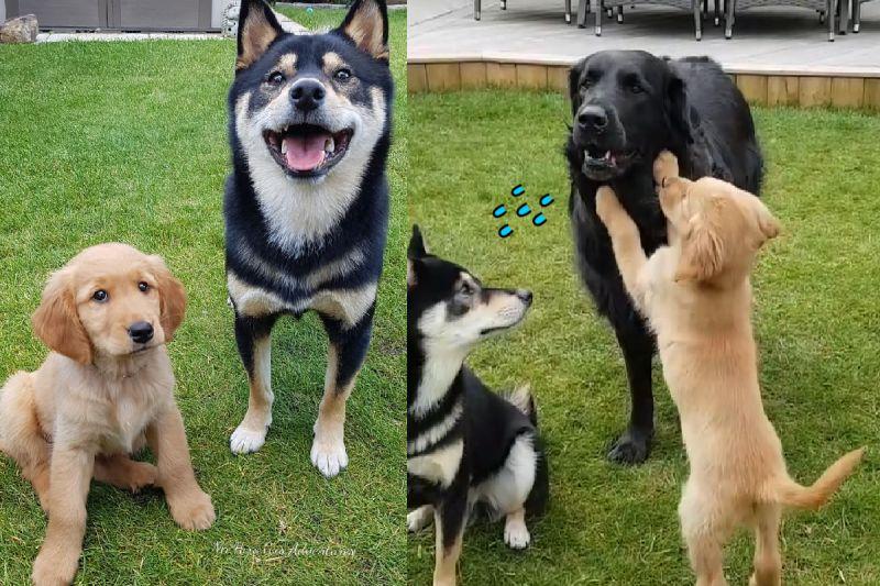 三隻狗狗坐下準備領零食,一隻頑皮小奶汪突然按捺不住、破壞隊形想玩了!(圖/Instagram@mr.hiro.gus.adventures)