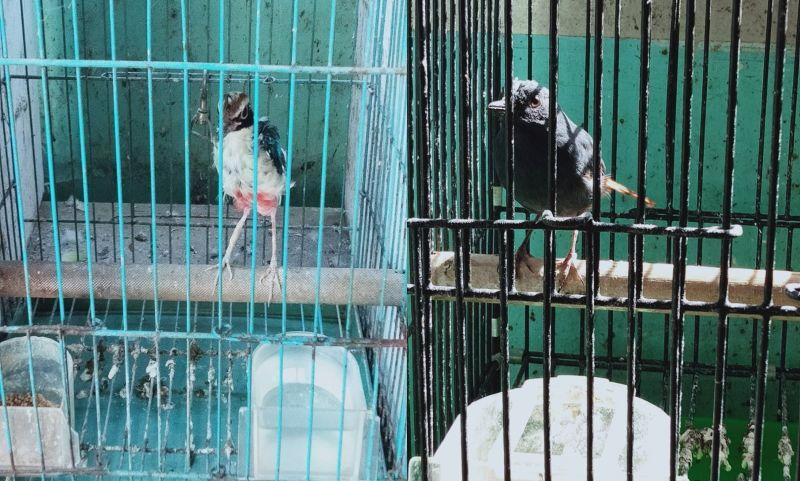 ▲南檢破獲野生動物盜賣集團,查扣保育類野生動物活體共計19物種64隻。(圖/記者陳聖璋翻攝)