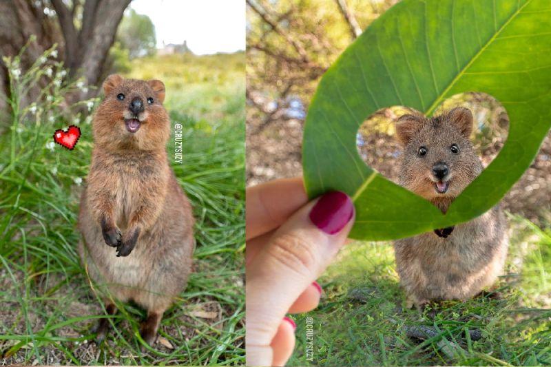 最愛笑的「小袋鼠」,有著圓頰大眼萌力四射!(圖/Instagram@cruzysuzy)