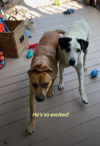 ▲夫婦使出殺手鐧:他們家的狗狗
