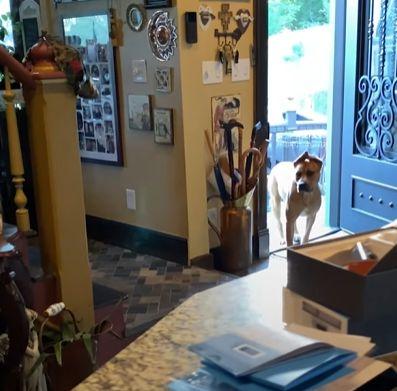 ▲卡在家門口的Scooby,「到底要不要信任他們?」在他腦袋裡高速的轉著(圖/Facebook@The