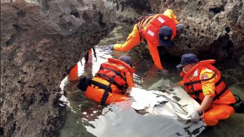 小<b>琉球</b>海龜困礁岩 海巡人員搬運百米成功救援