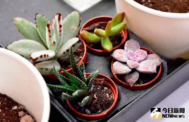 園藝療癒課程