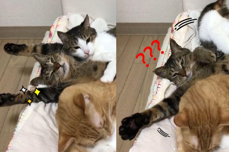 貓貓「左擁右抱」好爽快 下秒懷裡空空:發生什麼事了?