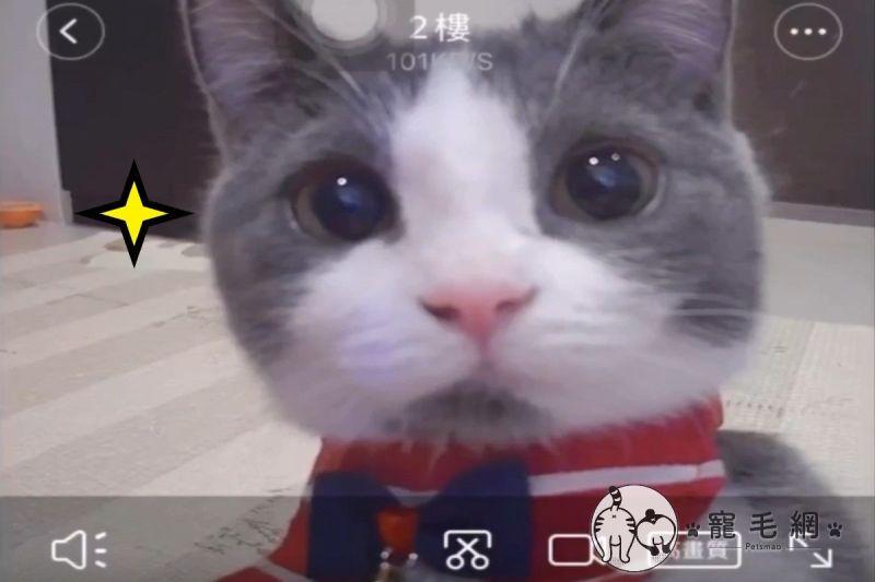 ▲貓咪「朵朵」凝視監視器的模樣超級可愛(圖/網友李安久授權提供)