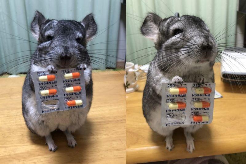 主人生病龍貓「小手拿膠囊」 貼心提醒:要吃藥喔!